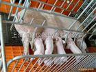 防水上海豬羊畜牧秤,畜牧專用動物電子秤