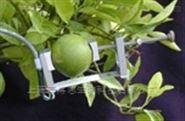 美国Dynamax DEX果实-树木茎干生长测量仪