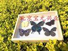 植物、昆虫标本盒
