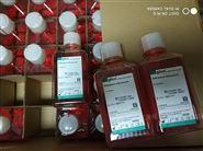 Gibco细胞培养基1640液体500ml C11875500BT