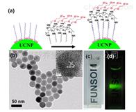 纳米颗粒油酸修饰上转换纳米颗粒