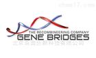 Gene Bridge全国代理