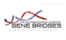Gene Bridge代理