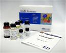 美国R&D美国RD Systems  RD销售总代理