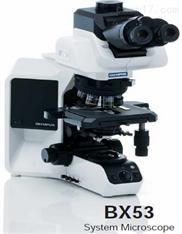 BX53 奧林巴斯顯微鏡