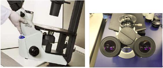 OLYMPUS奥林巴斯倒置生物显微镜CKX53使用方式