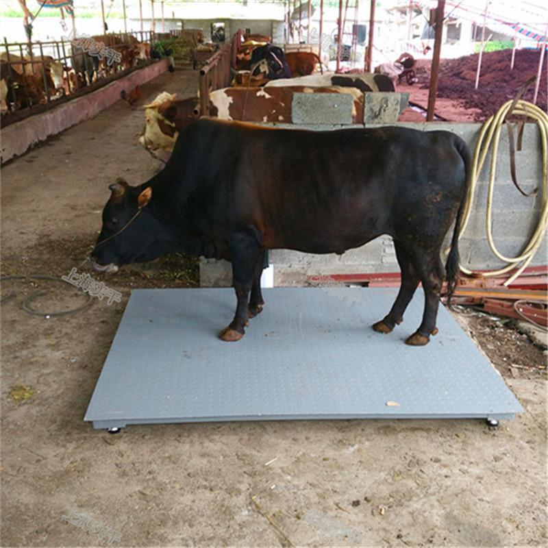 称猪电子地磅