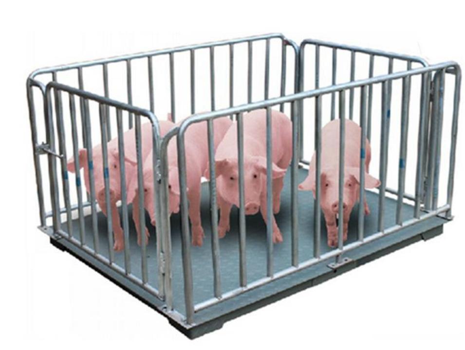 畜牧行业称猪电子磅