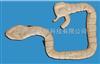MD/6243乙状结肠镜检查模型