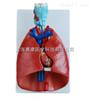 喉、心、肺模型