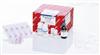 Qiagen现货Allprep RNA Protein Kit (50)